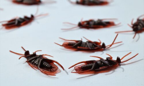 Pest Control Management